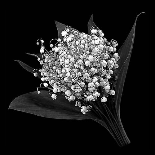 Цветок 100