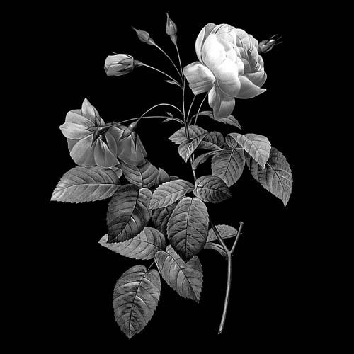 Цветок 101