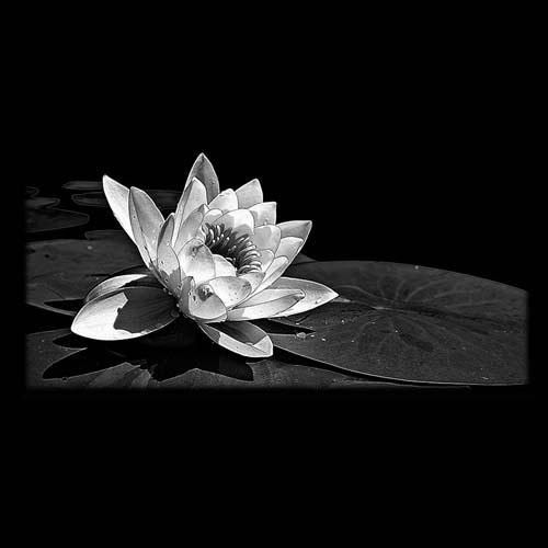 Цветок 115