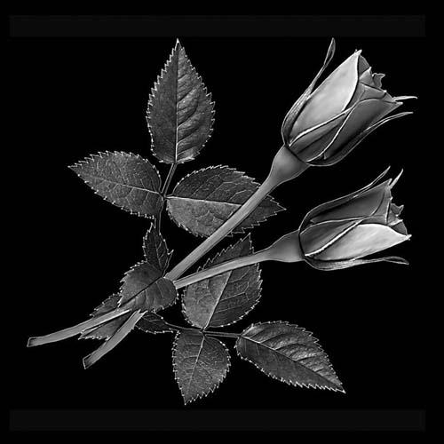 Цветок 145