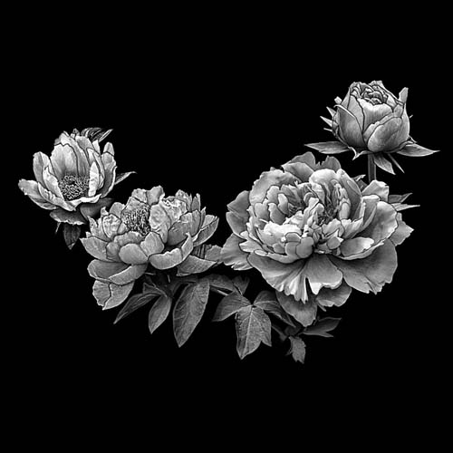 Цветок 146