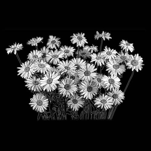 Цветок 55
