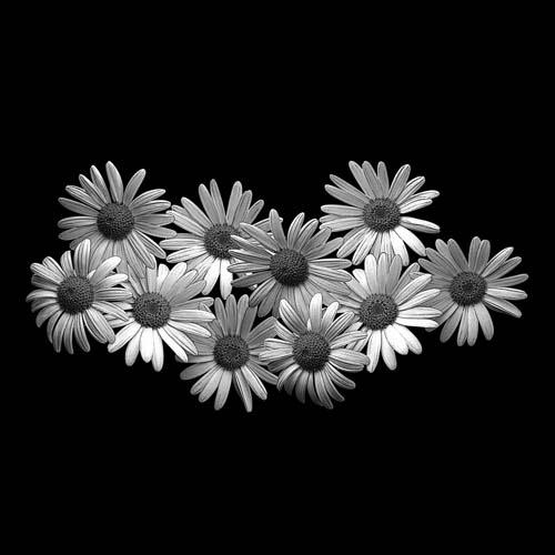 Цветок 66