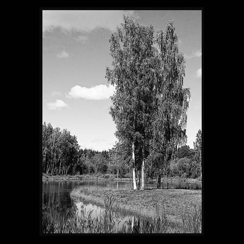Фон природы 11