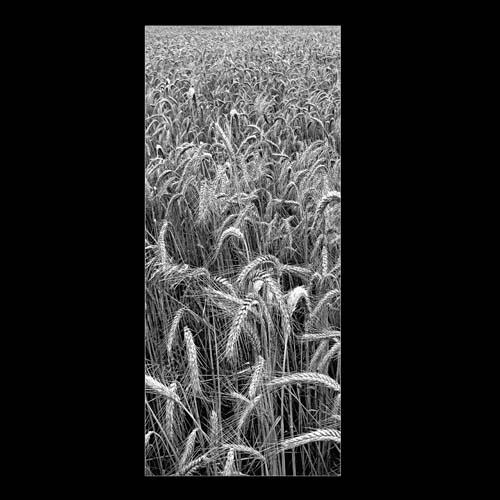 Фон природы 19